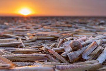 Muschelbett am Strand von Anja Brouwer Fotografie