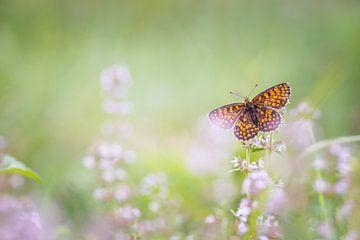 Oranje vlinder van Diana de Vries