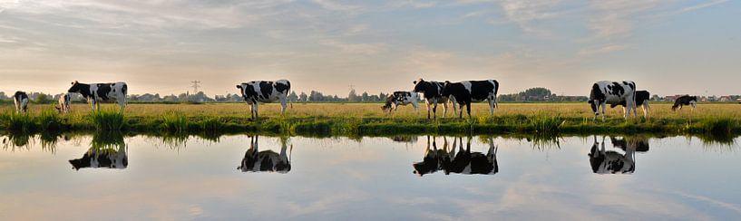 cow reflection van M K