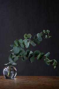 Foto print van groene takken in glazen vaasje tegen donkere achtergrond van Jenneke Boeijink