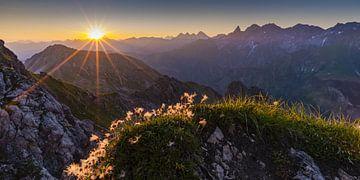 Alpenblumen, Allgäuer Alpen von Walter G. Allgöwer
