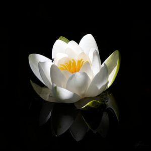 Weiße Seerose von Henk Zielstra