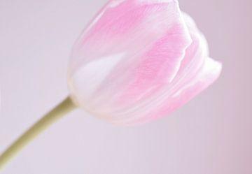 Roze tulp von Manon Sloetjes