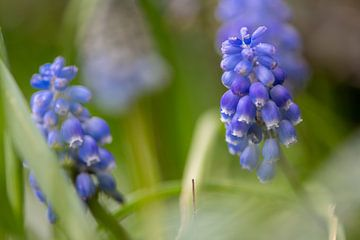 Blauer Traum von Ingrid Aanen