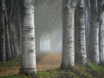 Een mooie laan met bomen in de herfst net buiten Den Bosch.