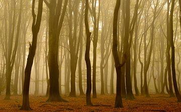 Beech tree forest  sur Sjoerd van der Wal