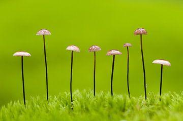 Pilze in einer Linie von AGAMI Photo Agency