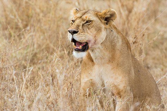 Serengeti Leeuwin