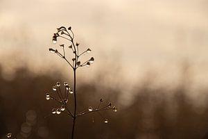 Planten met waterdruppels op een half mistige dag in december