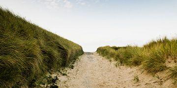 Dune passage near Cadzand Bad von