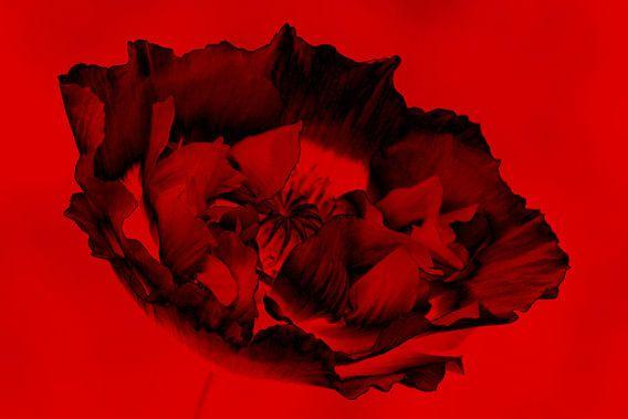 zwart&rood van Yvonne Blokland