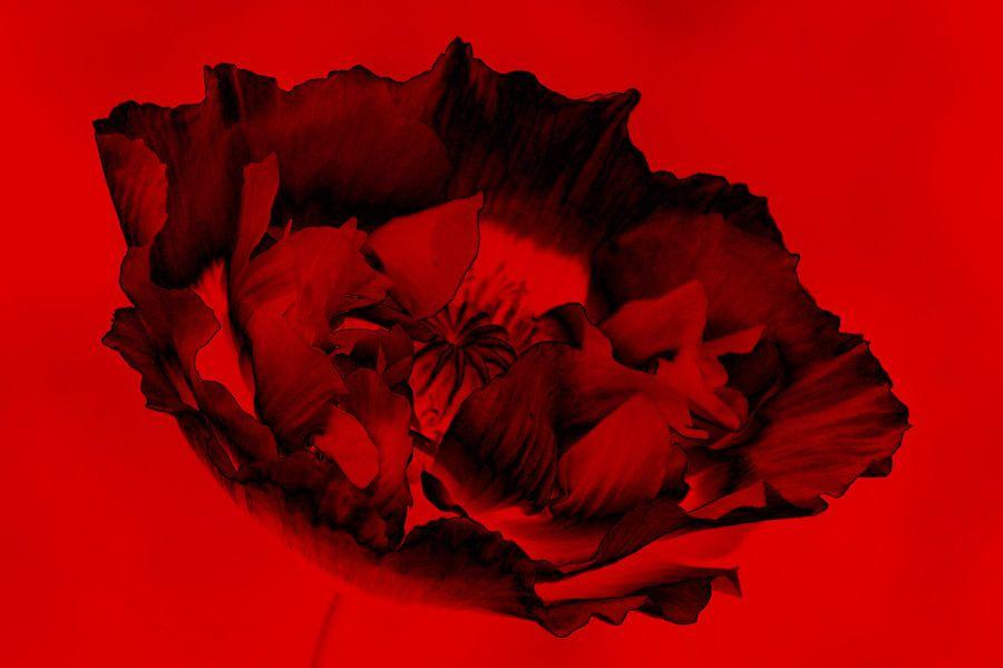 zwart&rood
