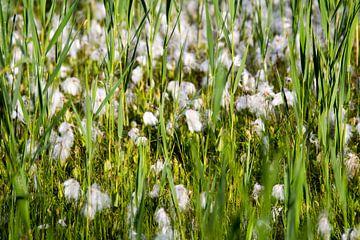 Witte bloemen in een grasveld van Marcel Alsemgeest
