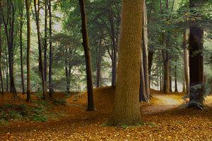 Speulderbos , het pad.
