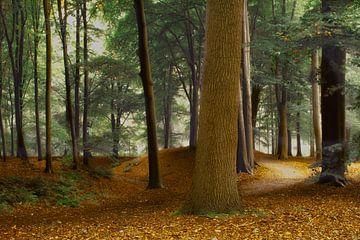 Speulderbos , het pad. van
