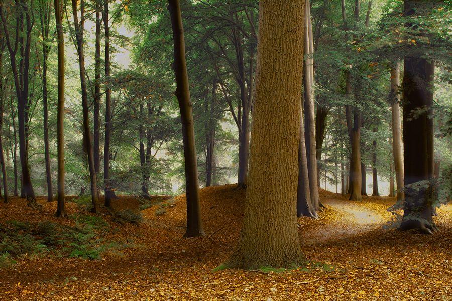 Speulderbos , het pad. van Jos Erkamp