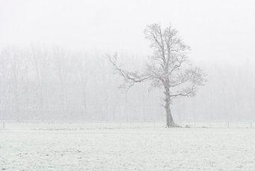einsamer Baum von Jeannette Kliebisch