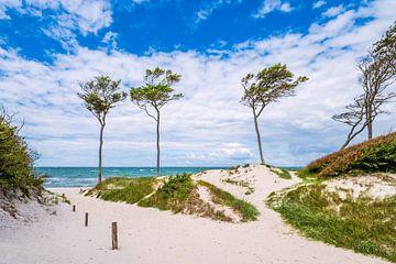 Bäume und Düne am Weststrand auf dem Fischland-Darß von Rico Ködder