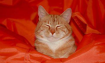 Snooze ZzzzZ. Lieve rode slapende Europesche korthaar op een oranje zitzak fatboy van noeky1980 photography