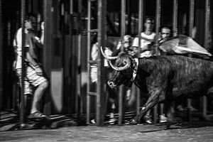 Stierengevecht