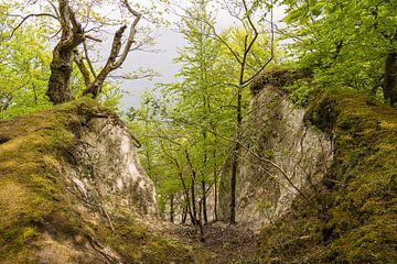 Küstenwald auf der Insel Rügen von Rico Ködder