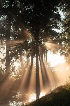 De zon schijnt prachtig door de bomen (staand) van Michel Geluk