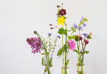 Blumen von Siska Heus