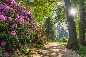 Sonnenaufgang im Schlosspark von Bad Homburg von Christian Müringer