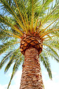 palmboom van Eveline De keukelaere