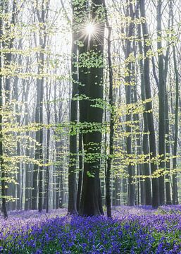 Sonne zwischen den Bäumen, Burim Muqa von 1x