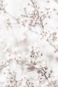 Hochkarätige minimalistische Blüte Nahaufnahme von Art By Dominic