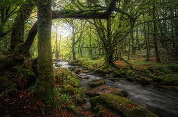 Middeleeuwse schoonheid van Joris Pannemans - Loris Photography