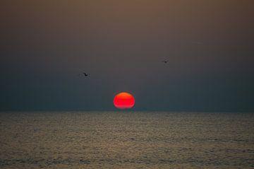Zonsondergang met vogels van Richard Steenvoorden