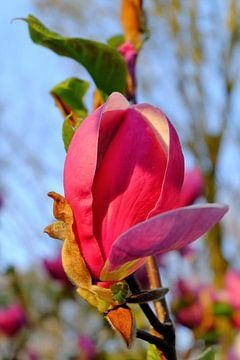 Bloemknop aan de Tulpenboom van Marian Klerx
