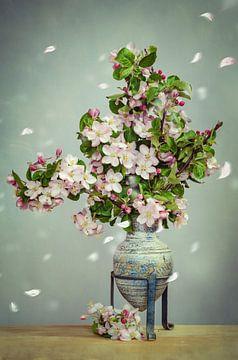 Apfelblüten Stillleben von Steffen Gierok