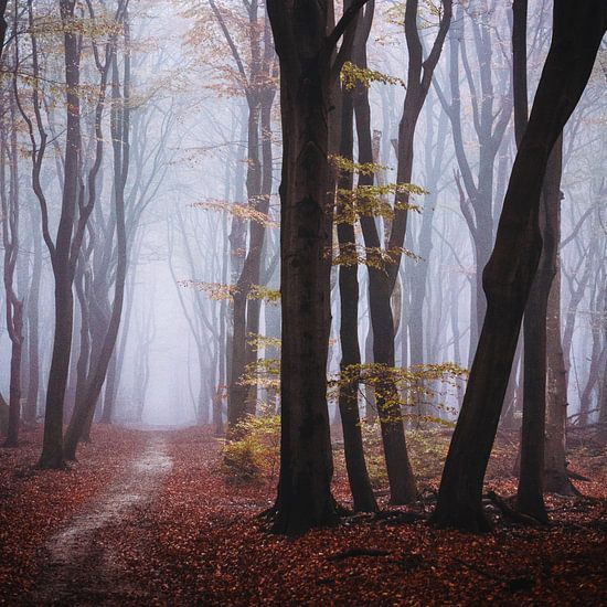 Een wereld alleen van Tvurk Photography