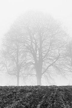 Bomen in de mist van Ubo Pakes
