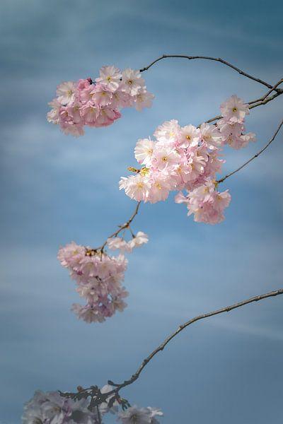 Wallpaper blossoms van Alessia Peviani