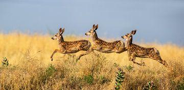 Tripple Jump, verdon von 1x