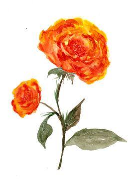 Oranje rozen van ZeichenbloQ