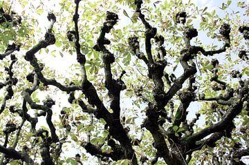 Luzernse bomen van Jessica van den Heuvel