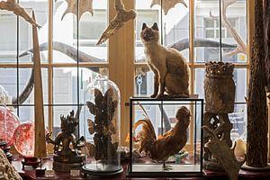 Opgezette dieren in winkel van