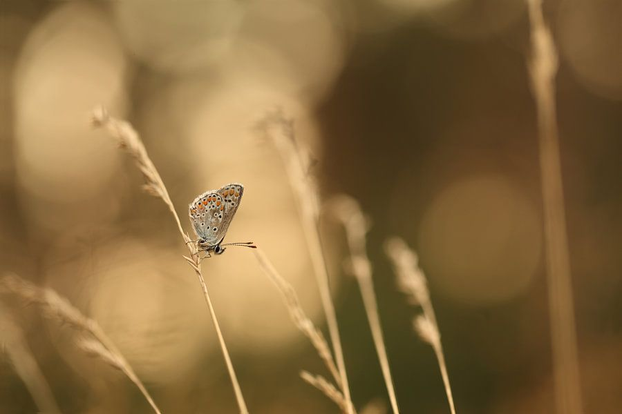 Vlinder op een takje
