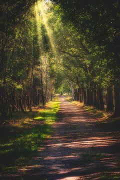 Take The Long Way Home van Arjen Uijttenboogaart