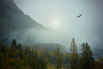 Ein Adler fliegt über den nebligen Wald von Anam Nàdar
