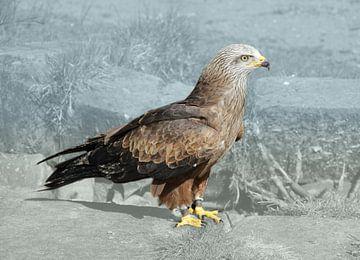 Rotmilan, ein Raubvogel von Bianca Wisseloo