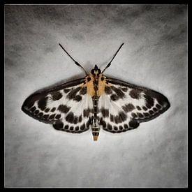 Nachtvlinder van Kuba Bartyński