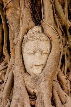 Boeddha in boom van Easycopters
