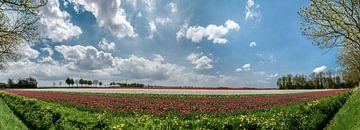 Tulpen auf einem Feld im Frühling im Noordoostpolder, Flevoland von Sjoerd van der Wal