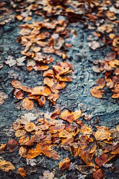 Gouden herfst - bladeren op de bosbodem van Jonathan Schöps | UNDARSTELLBAR